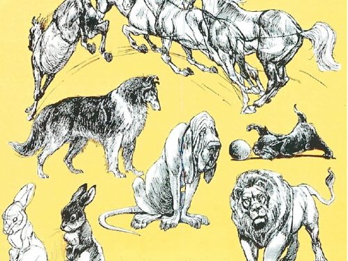 manuals: how to draw animals